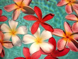 ハワイ.jpegのサムネイル画像