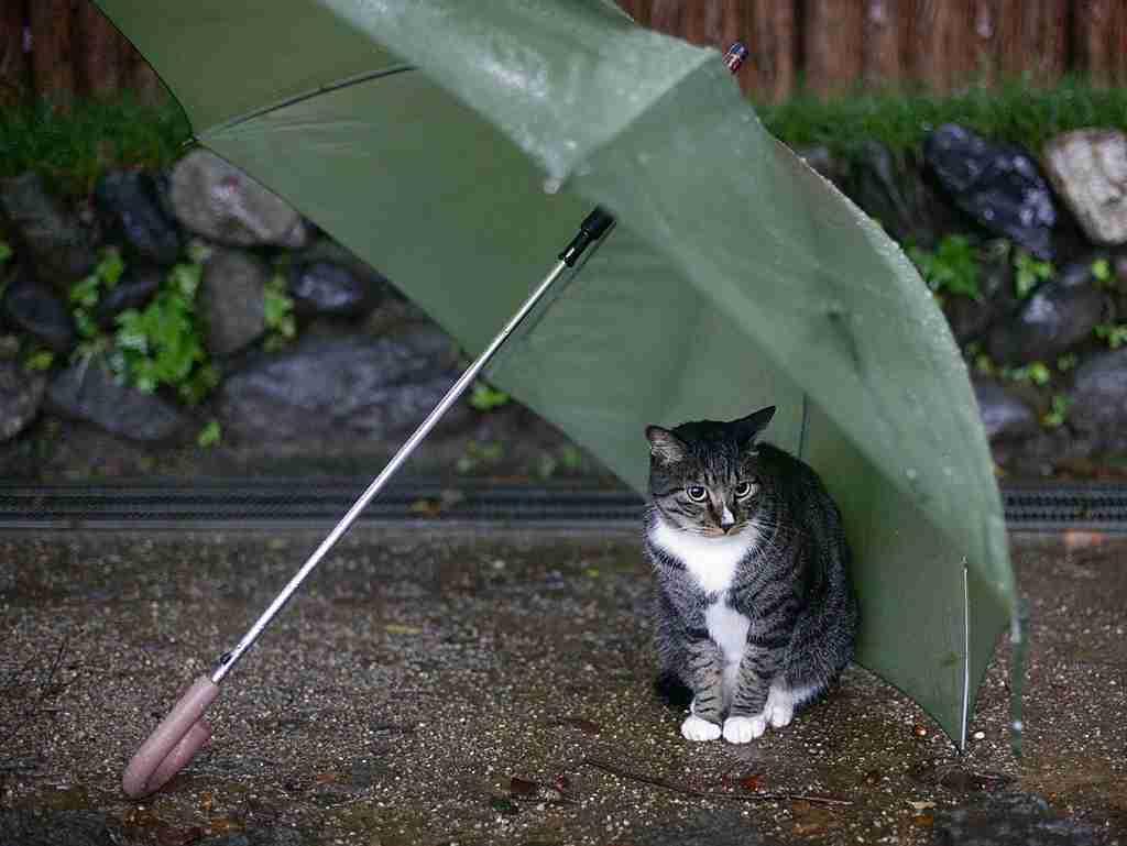 雨 ネコ.jpeg